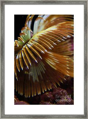 Underwater Feathers Framed Print