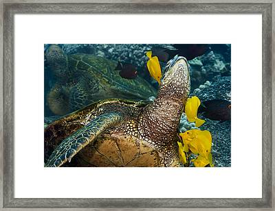 Underwater Friends Framed Print by Dave Fleetham