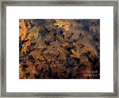 Underwater Leaves Framed Print by Robert Ball