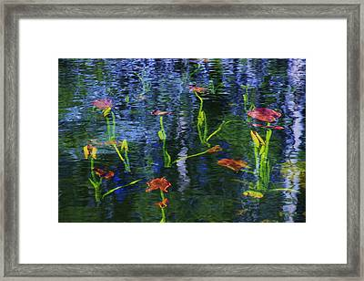 Framed Print featuring the photograph Underwater Lilies by Sean Sarsfield