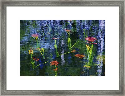 Underwater Lilies Framed Print