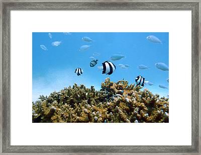 Underwater Okinawa Framed Print by Takau99