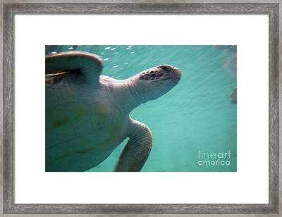 Underwater Race Framed Print