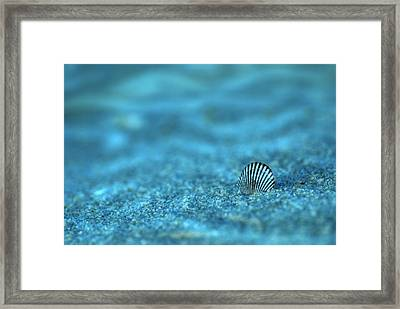Underwater Seashell - Jersey Shore Framed Print