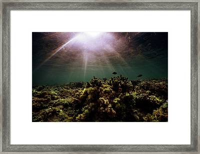 Underwater Sunset Framed Print
