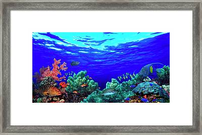 Underwater View Of Pallid Triggerfish Framed Print by Panoramic Images