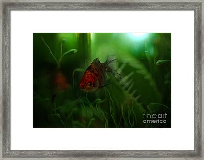 Underwater World Framed Print by Angel  Tarantella