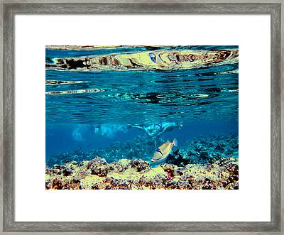 Underwater World. Beautiful Fish. Framed Print by Andy Za
