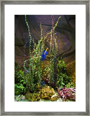 Underwater03 Framed Print by Svetlana Sewell