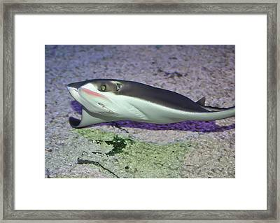 Underwater04 Framed Print by Svetlana Sewell