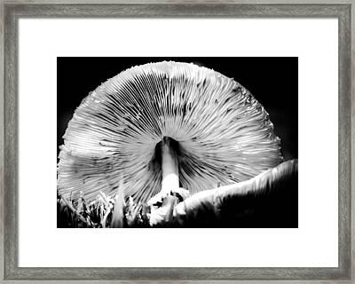 Underworld Secrets Framed Print by Karen Wiles