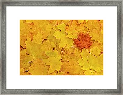 Understory Framed Print by Tony Beck