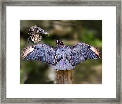 Unexpected Beauty Framed Print by Delores Knowles