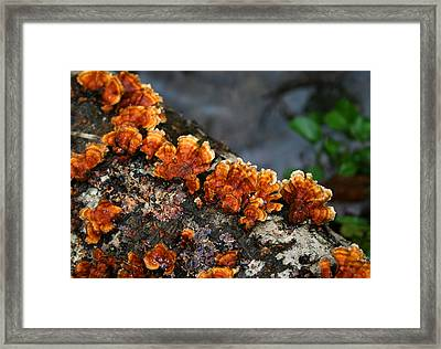 Unexpected Brightness Framed Print by Andrei Shliakhau