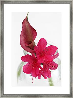 Unexpected Pairing 2 Framed Print by Amanda Barcon
