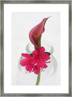 Unexpected Pairing Framed Print by Amanda Barcon