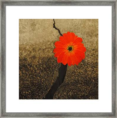 Unfailing Love Framed Print by Toni McKinley