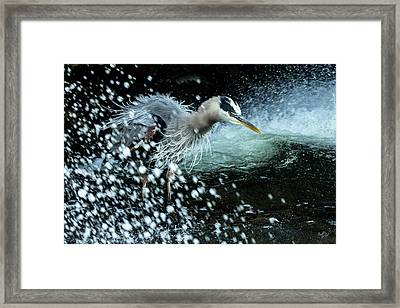 Framed Print featuring the photograph Unfazed Focus by Everet Regal