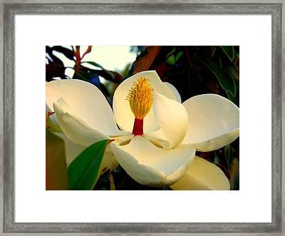 Unfolding Beauty Framed Print by Karen Wiles