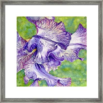 Unfolding-iris Framed Print by Nancy Newman