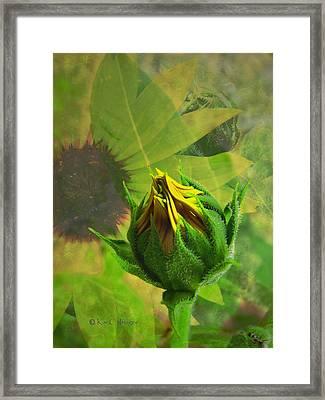 Unfolding Sunflower Framed Print