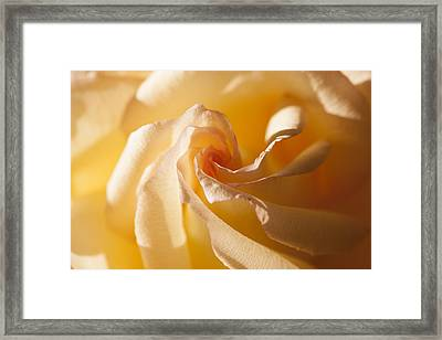 Unfurling Framed Print
