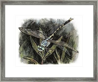 Unicorn Clubtail Framed Print