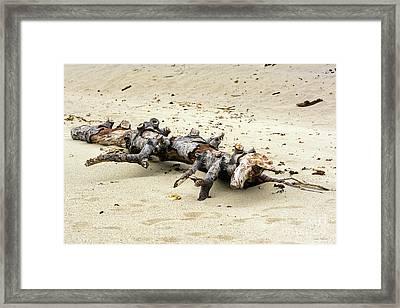 Unicorn Resting On A Beach Framed Print