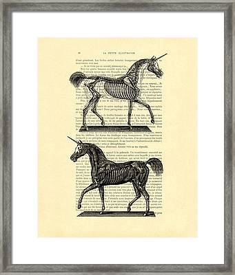 Unicorns Anatomy Framed Print