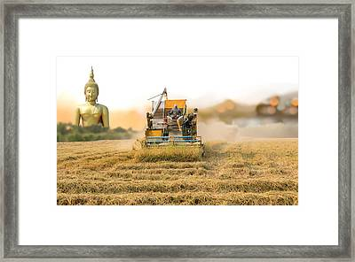 Unidentified Man With Harvester Machine To Harvest Rice Field An Framed Print by Suwinai Sukanant