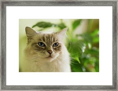Unimpressed Framed Print by Cathryn Hardwick