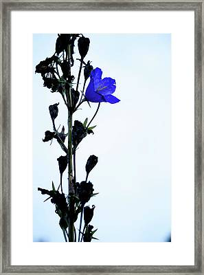 Unique Flower Framed Print by Teemu Tretjakov