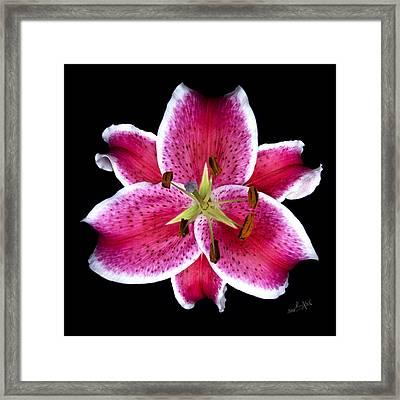 Unique Lily In Fushia Framed Print by Kimxa Stark