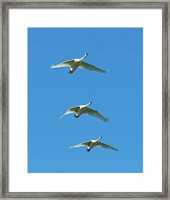 Unison Framed Print