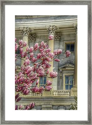 United States Capitol - Magnolia Tree Framed Print by Marianna Mills
