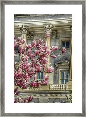 United States Capitol - Magnolia Tree Framed Print