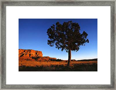 United States, New Mexico, Pine Tree Framed Print