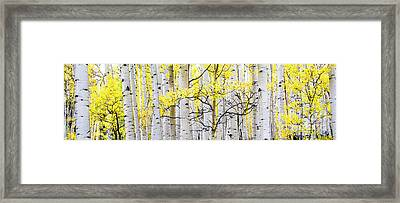 Unititled Aspens No. 6 Framed Print by The Forests Edge Photography - Diane Sandoval