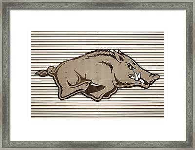University Of Arkansas Razorback On Metal - Sepia Edition Framed Print by Gregory Ballos