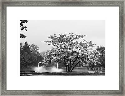 University Of Connecticut Landscape Framed Print