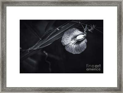 Unknown Beauty Framed Print