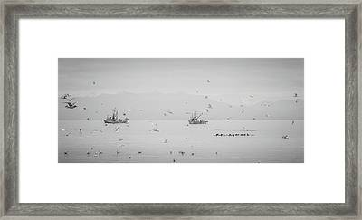 Unlimited Action Herring Season Framed Print by Roxy Hurtubise
