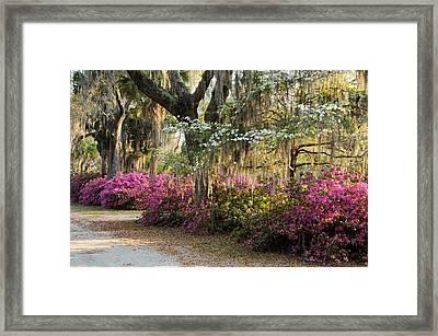 Unpaved Road In Spring Framed Print