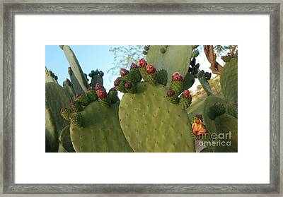 Unprickly Prickly Pear Horizontal Framed Print
