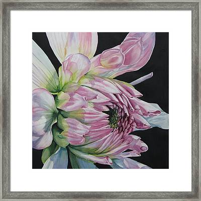 Unravelling-dahlia Framed Print by Nancy Newman