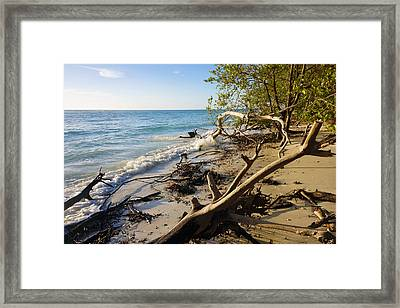 The Unspoiled Beaty Of Barefoot Beach Preserve In Naples, Fl Framed Print