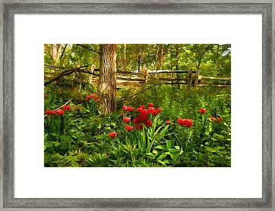 Untamed Tulip Forest - Impressions Of Spring Framed Print by Georgia Mizuleva