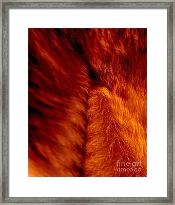 Untamed Vortex Framed Print by P Russell