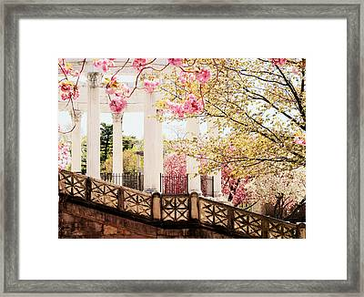 Untermyer Cherry Blossoms Framed Print