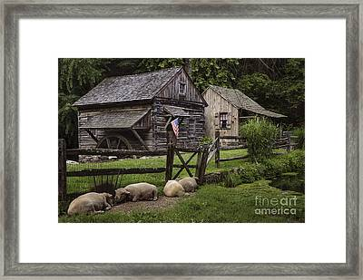 Untitled Cuttalossa Iv Framed Print by Debra Fedchin